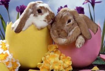Wielkanoc 2015 – godziny święceń, otwarcia sklepów i sprzedaży alkoholu